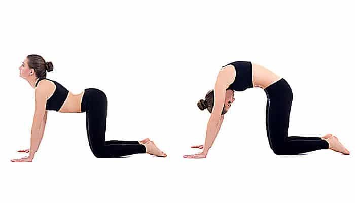 pose gato vaca para yoga prenatal